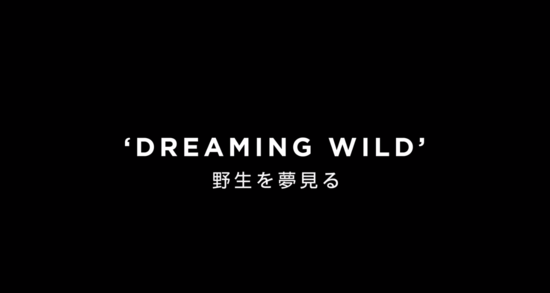 4 Klahr KEV Dreaming Wild Lyric Video YouTube